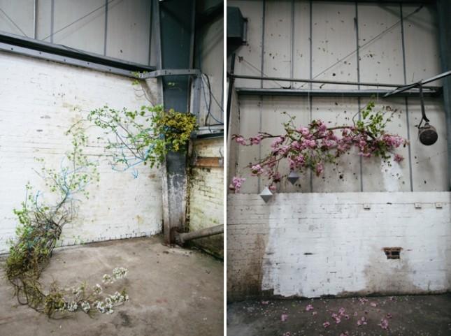 British grown botanicals